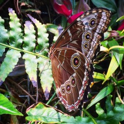 Butterfly at California