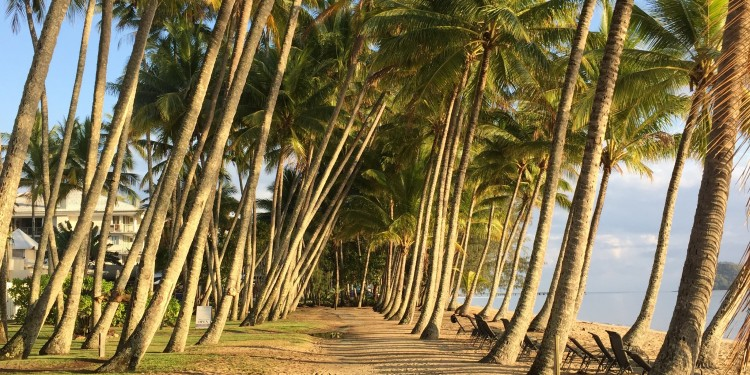 Cairns trees